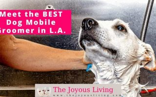 The Joyous Living: Best Dog Mobile Groomer in Los Angeles