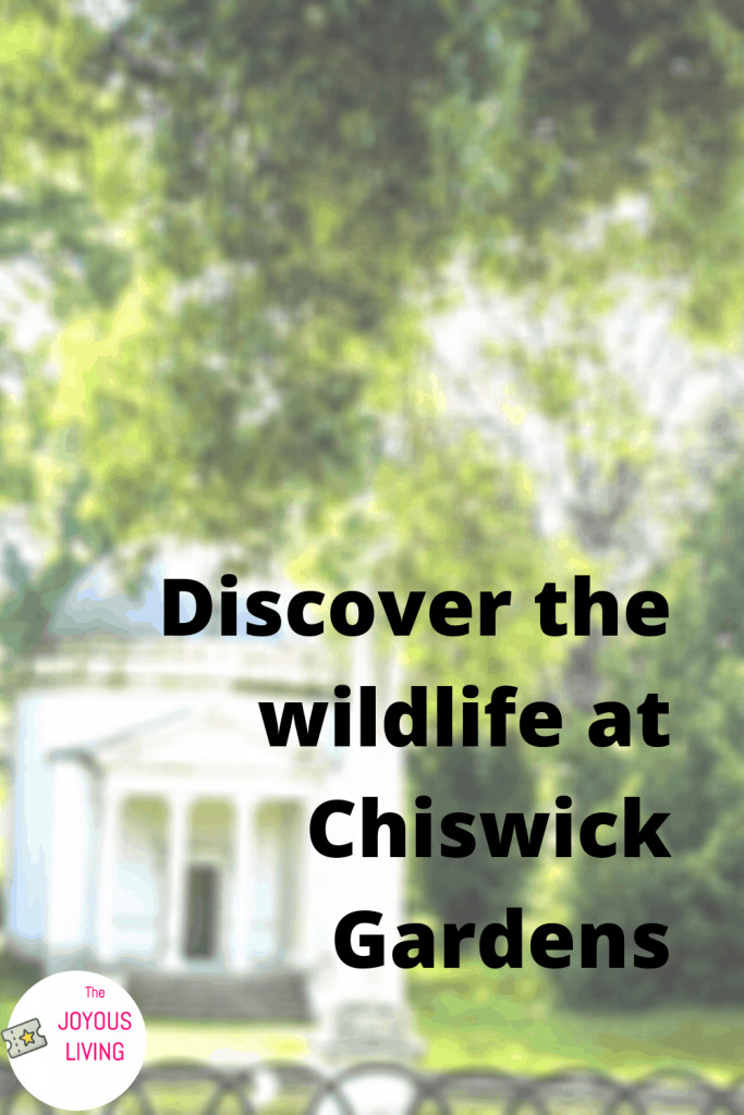 Discover a hidden gem of London #london #gardens #chiswickgardens #chiswickhouse #animals #nature #travel #thejoyousliving