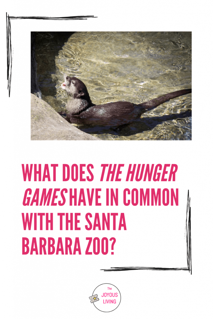 Meet the otter named after Hunger Games' Peeta #peeta #hungergames #santabarbara #santabarbarazoo #zoo #otter #thejoyousliving #animals