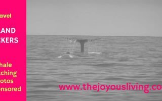 The Joyous Living: Whale Watching with Island Packers