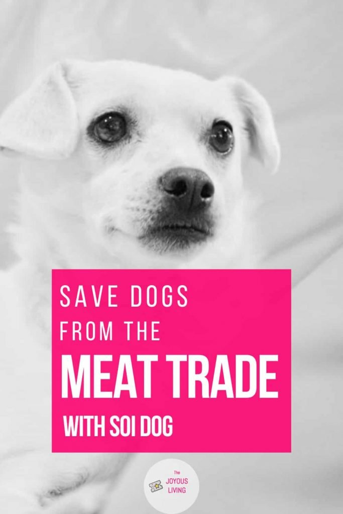 Save dogs from the dog meat trade #dogmeattrade #dogmeat #dogs #adoptdontshop #soidog #yulindogs #thejoyousliving #charity #nonprofit #thailand #thaidogs