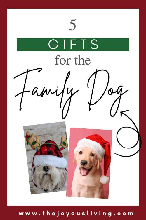 5 gifts for the dog