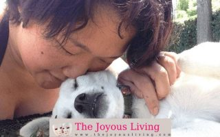Dogs on The Joyous Living