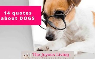 The Joyous Living: 14 Quotes about Dogs