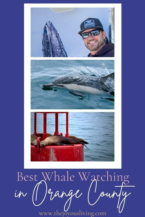 best whale watching in orange county